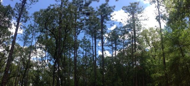 trees in hammock
