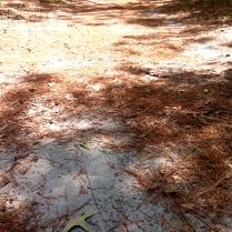 Sand and pine needles
