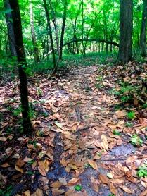 Magnolia leaves on trail
