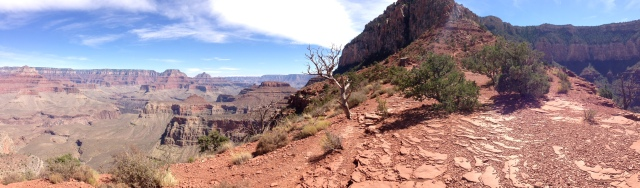 View from Cedar Ridge on South Kaibab Trail - photo by Julie Dodd