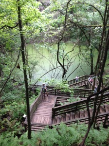 Devil's Millhopper stairs - photo by Julie Dodd
