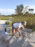 SCCF sea turtle volunteer inventorying sea turtle nest