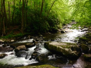 GSMNP Little River - photo by Julie Dodd