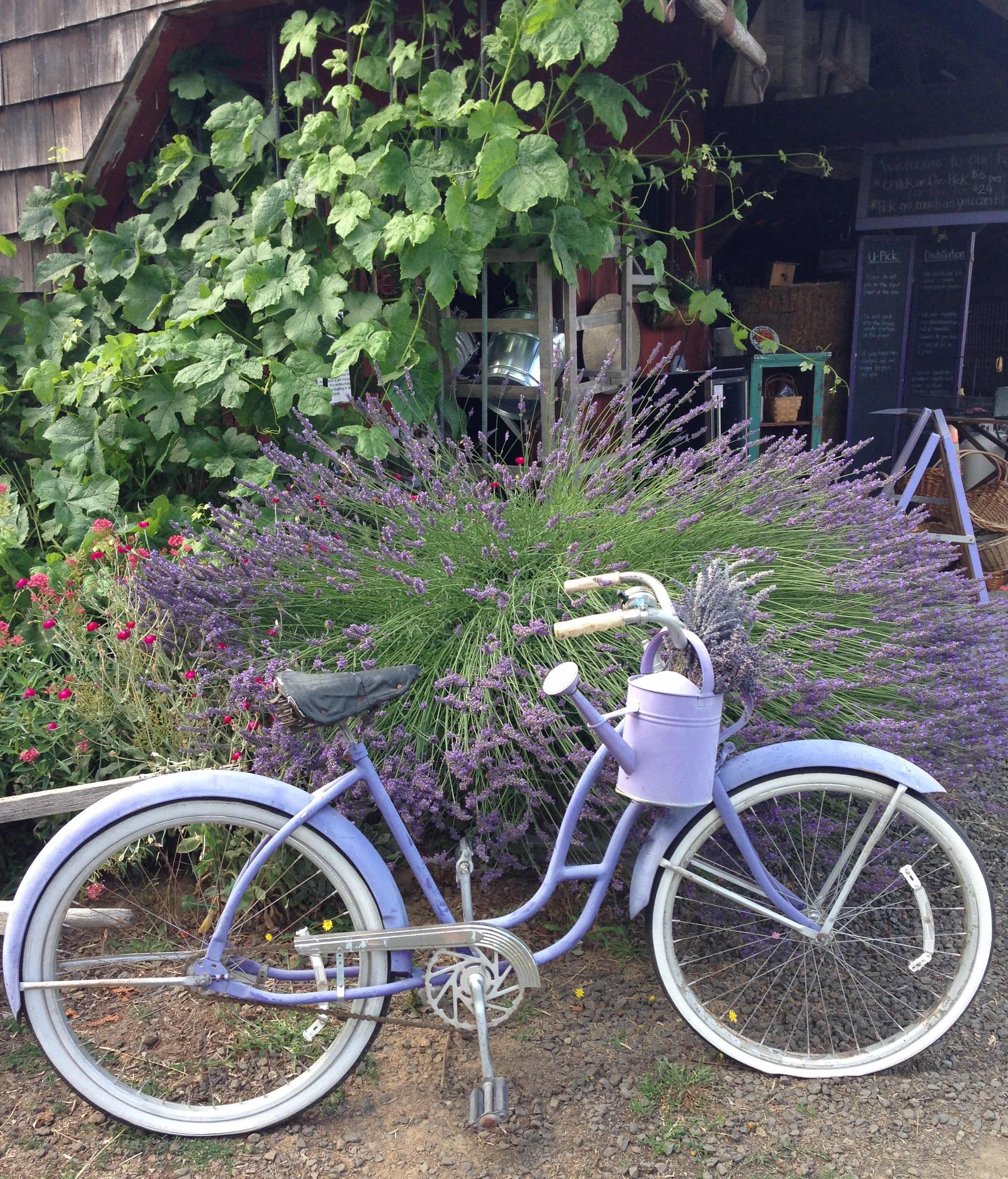 lavender bike and lavender